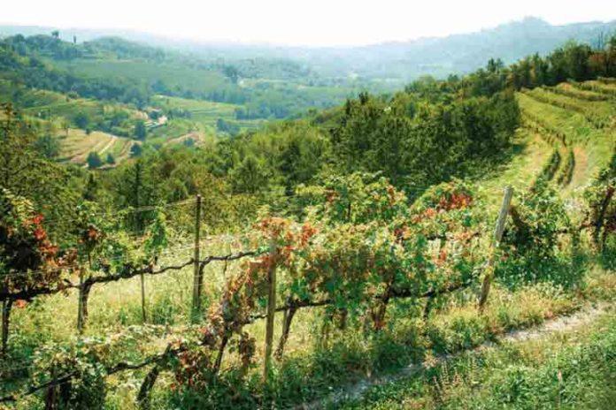 Il vino delle terre Lariane - Corriere del Bar